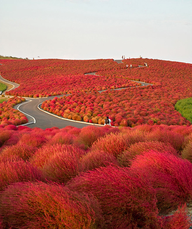 Hitachi Seaside Park - Japão